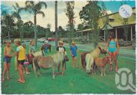 "<span class=""caption-caption"">Children playing with the miniature horses - always friendly and love kind people at The Palms Horse Stud Farm, 10kms from Surfers Paradise at Nerang</span>, c1970-2000. <br />Postcard, collection of <span class=""caption-contributor"">Murray Views Collection</span>."