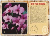 "<span class=""caption-caption"">Cooktown Orchid</span>, c1970-2000. <br />Postcard, collection of <span class=""caption-contributor"">Murray Views Collection</span>."