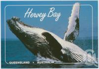 "<span class=""caption-caption"">The Humpback Whale, the most active and acrobatic of the great whales, the Humpbacks grow to 16 metres in length and weigh up to 40 tonnes, hervey Bay</span>, c1970-2000. <br />Postcard, collection of <span class=""caption-contributor"">Murray Views Collection</span>."