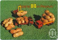 "<span class=""caption-caption"">We're big in peanuts, Kingaroy</span>, c1970-2000. <br />Postcard, collection of <span class=""caption-contributor"">Murray Views Collection</span>."