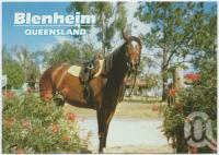 "<span class=""caption-caption"">Blenheim</span>, c1970-2000. <br />Postcard, collection of <span class=""caption-contributor"">Murray Views Collection</span>."