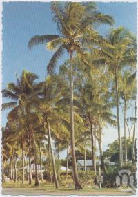 "<span class=""caption-caption"">Esplanade, Bucasia</span>, c1970-2000. <br />Postcard, collection of <span class=""caption-contributor"">Murray Views Collection</span>."