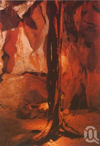 """<span class=""""caption-caption"""">The Beanstalk', Cammoo Caves, 22 km north of Rockhampton</span>, c1990. <br />Postcard by <span class=""""caption-publisher"""">Murray Views Pty Ltd</span>, collection of <span class=""""caption-contributor"""">Centre for the Government of Queensland</span>."""