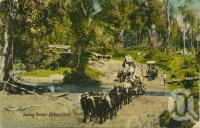 "<span class=""caption-caption"">Hauling timber, Queensland</span>, c1910. <br />Postcard by <span class=""caption-publisher"">Valentine & Sons</span>, collection of <span class=""caption-contributor"">Centre for the Government of Queensland</span>."