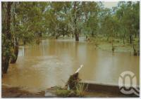 "<span class=""caption-caption"">Canopus Creek Billabong in flood April 1990, located between Springsure and Rolleston</span>, c1970-2000. <br />Postcard, collection of <span class=""caption-contributor"">Murray Views Collection</span>."