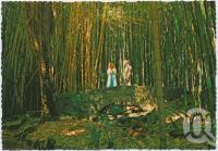 """<span class=""""caption-caption"""">The Bamboo Grove, Rainforest Tourist Park, High Tor, Maleny</span>, c1970-2000. <br />Postcard, collection of <span class=""""caption-contributor"""">Murray Views Collection</span>."""