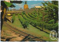 "<span class=""caption-caption"">Sunshine Plantation, the Big Pineapple, Sunshine Coast</span>, c1970-2000. <br />Postcard, collection of <span class=""caption-contributor"">Murray Views Collection</span>."