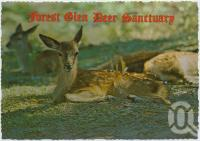 "<span class=""caption-caption"">Forest Glen Deer Sanctuary, Bruce Highway, Nambour, a Red Deer Fawn at the Forest Glen Deer Sanctuary</span>, c1970-2000. <br />Postcard, collection of <span class=""caption-contributor"">Murray Views Collection</span>."