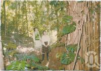 """<span class=""""caption-caption"""">At the base of the 19-metre Monstera, Rainforest Tourist Park, High Tor, Maleny</span>, c1970-2000. <br />Postcard, collection of <span class=""""caption-contributor"""">Murray Views Collection</span>."""