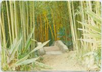 """<span class=""""caption-caption"""">The Bamboo Grove, Rainforest Tourist Park, High Tor Maleny</span>, c1970-2000. <br />Postcard, collection of <span class=""""caption-contributor"""">Murray Views Collection</span>."""
