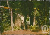 """<span class=""""caption-caption"""">Entrance to forest walk, Rainforest Tourist Park, High Tor, Maleny</span>, c1970-2000. <br />Postcard, collection of <span class=""""caption-contributor"""">Murray Views Collection</span>."""