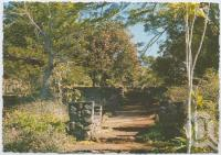"""<span class=""""caption-caption"""">Formal gardens, Rainforest Tourist Park, High Tor, Maleny</span>, c1970-2000. <br />Postcard, collection of <span class=""""caption-contributor"""">Murray Views Collection</span>."""