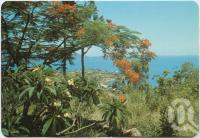 "<span class=""caption-caption"">Glimpse of resort through Frangipanni and Poinciana trees, Airlie Beach</span>, c1970-2000. <br />Postcard, collection of <span class=""caption-contributor"">Murray Views Collection</span>."