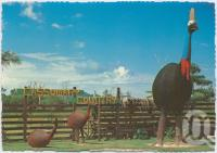"<span class=""caption-caption"">Giant Cassowary, Mission Beach</span>, c1970-2000. <br />Postcard, collection of <span class=""caption-contributor"">Murray Views Collection</span>."