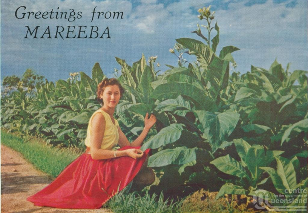 Mareeba Australia  city photos : Mareeba, the tobacco capital of Australia , c1961. Postcard folder by ...