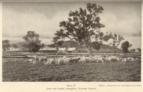 Glengallan Shire | Queensland Places