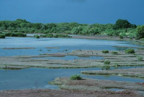 Helen Horton Islands Of Moreton Bay